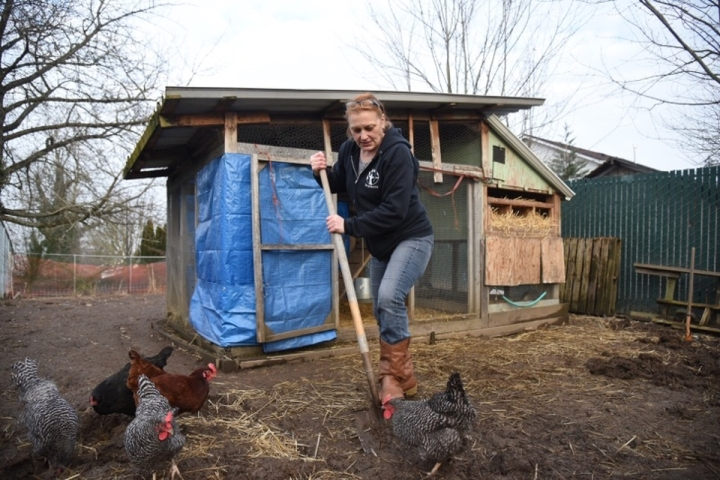 Cathy Haas cleans the chicken coop at Cathedral Gardens, a low-income apartment complex in St. Johns. Out-of-state property owners have warned the chickens must go. Photo by Joe Riedl.
